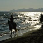 P.C. Ranch: Passeggiate a cavallo e corsi d'equitazione